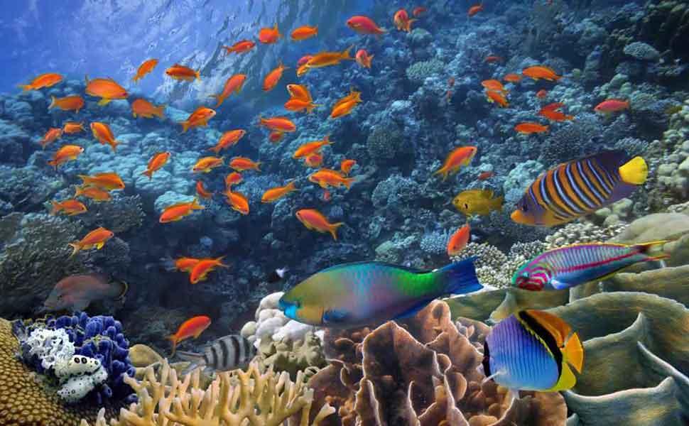 Дайвинг на коралловом рифе в Канкуне